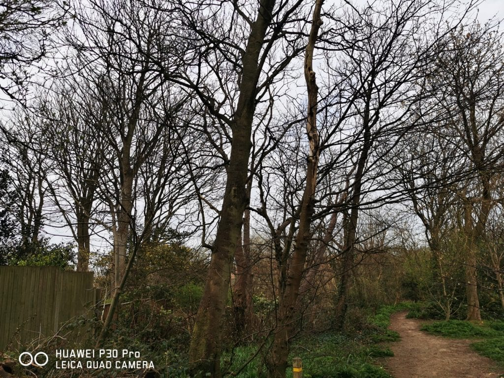 Huawei P40 Pro vs P30 Pro Camera Samples Compared & Photo Gallery 4